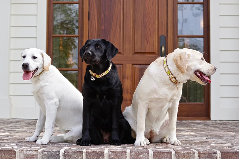 Canine Ambassadors on front steps