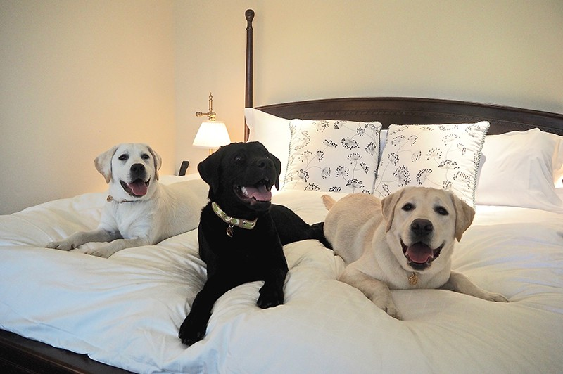 Canine Ambassadors on Inn room bed