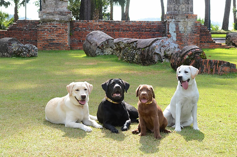 Montage Palmetto Bluff Canine Ambassadors on Village Green