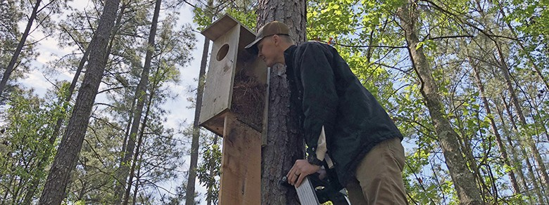 Cavity Nest Box Research by Palmetto Bluff Conservancy
